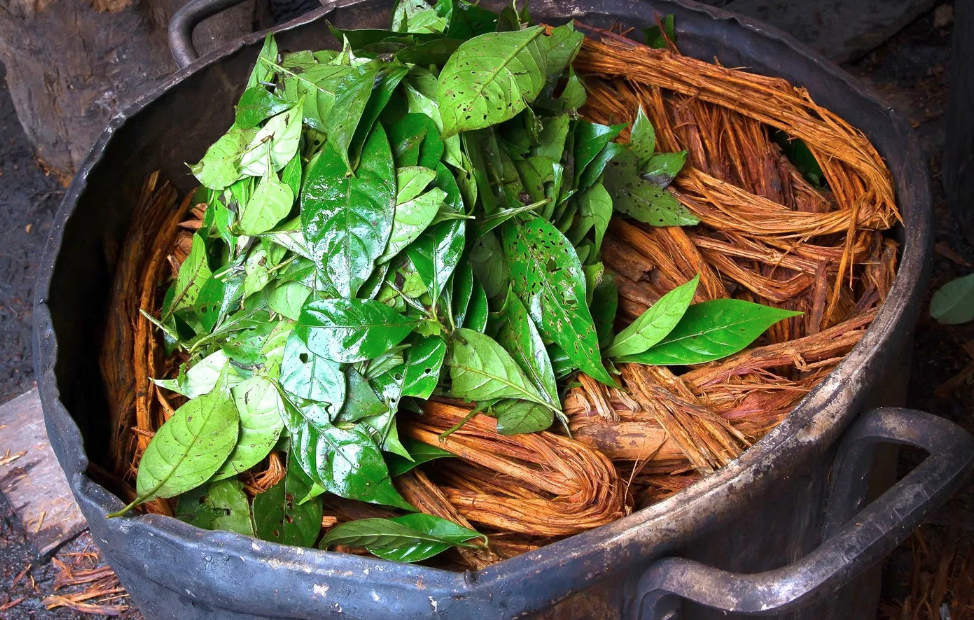 Ayahuasca helps heal any emotional issues